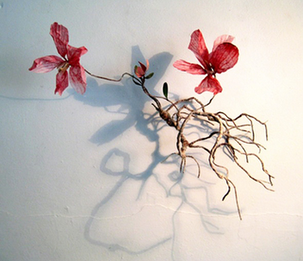 Frail Flower Paper Sculpture by Rebecca Jones