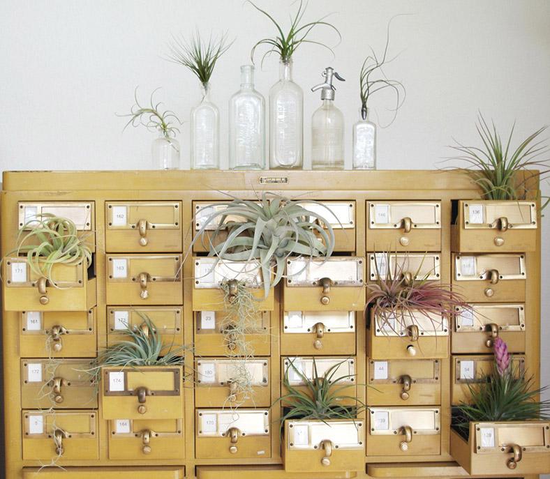 Plants & Planters ǀ The Design Tabloid (9)