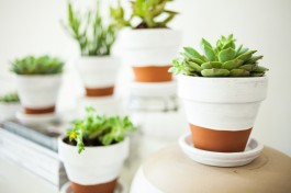 What brilliant contrast - a lick of bright white adds pop to these potted succulents | via painthttp://offbeatandinspired.com/2013/05/30/painted-pots-succulents/