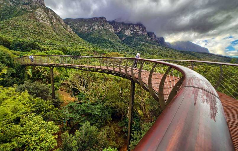 The Boomslang Tree Canopy Walkway at Kirstenbosch photographed by Bipin Prag.