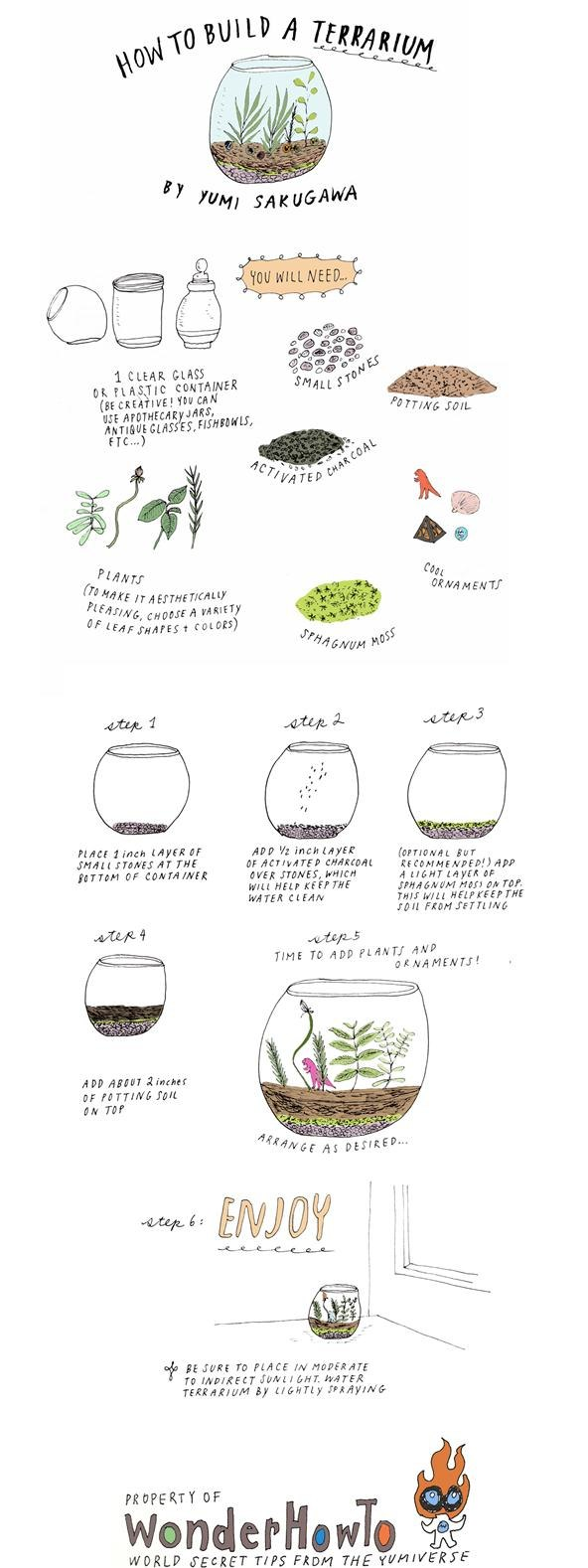 Build Your Own Terrarium DIY