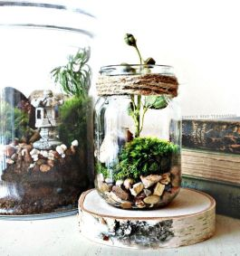 Decor Quick Tips - Terrarium (1)