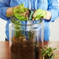 Quick Tip #38: Easy Greenery with Terrariums