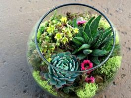 Decor Quick Tips - Terrarium (3)