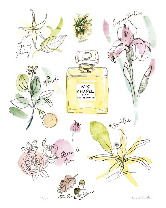 Chanel no 5 perfume ingredients illustration the design for Home ingredients design
